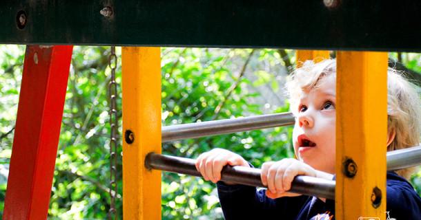 Miguel 3 anos – Festa na floresta!